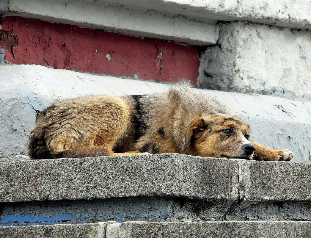 помощью картинки с бездомными животными для сайта используют комнатах, нуждающихся